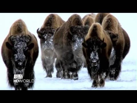 Animal Planet HD World