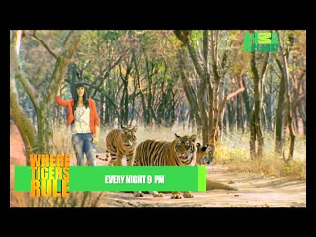 Where Tigers Rule - Nargis Fakhri - Eng